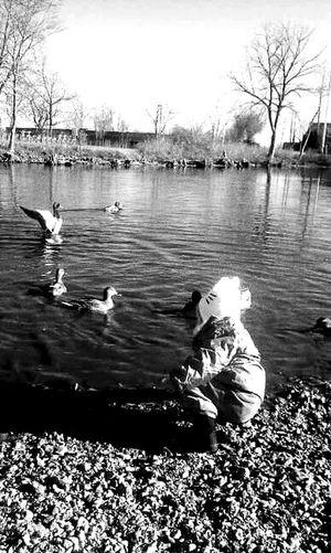 Freding Ducks