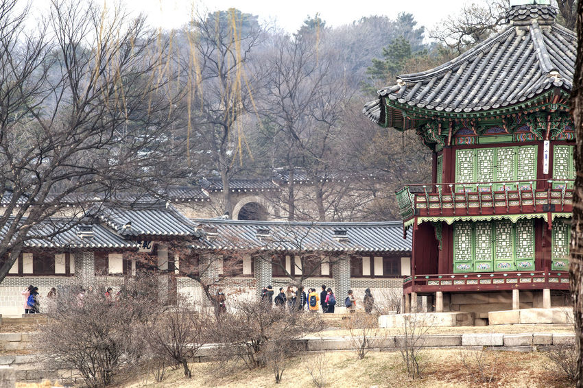 Architecture Bare Tree Building Exterior Built Structure Cold Temperature Day Gyungbok Palace Historic Place House Korean Traditional Architecture Nature Outdoors Palace Place Of Worship Religion Roof Season  Snow Spirituality Temple - Building Tradition Travel Destinations Tree Winter