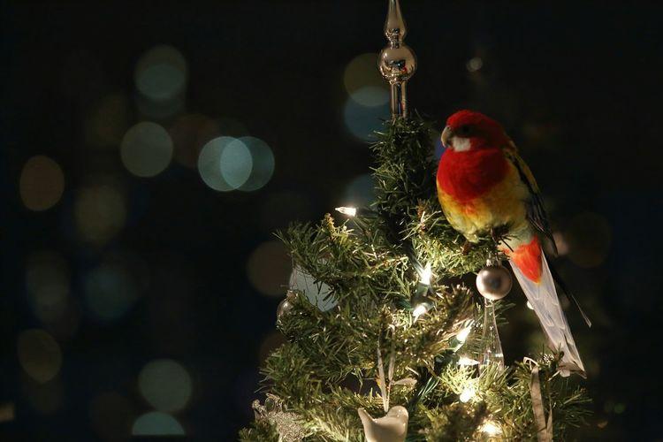 Best Christmas Lights EyeEm Nature Lover Streamzoofamily Christmas Christmas Lights Christmas Decorations