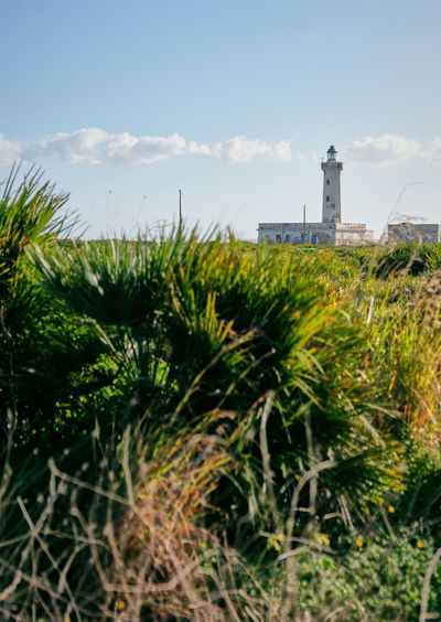 Architecture Beauty In Nature Building Exterior Built Structure Day Grass Green Color Growth Lighthouse Nature No People Outdoors Plant Sky