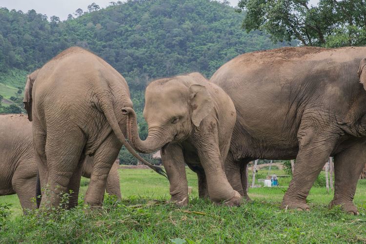 View of elephants in park