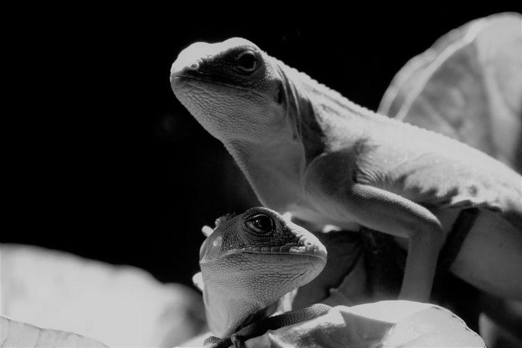 Close-up of lizards