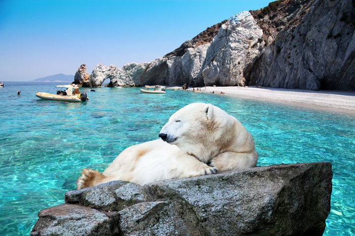 raphaela4you Animal Themes Animal Wildlife Animals In The Wild Bay Beachlife Beachphotography Beauty In Nature Boat Clear Sky Coast Ice Bear Landscape Mammal Mountains Nature Outdoors Polar Bear Polar Bear Polar Bears Rock - Object Sea Sky Summertime Travel Photography Travelling