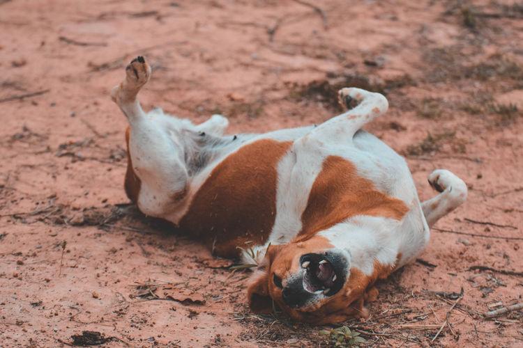 High angle view of dog lying on land