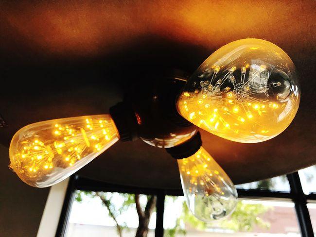 Branches in a bulb Light Light Bulb