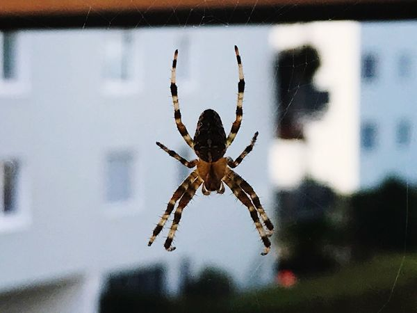 Spider One Animal Focus On Foreground Animal Themes Insect Animals In The Wild Day Close-up Spider Web Animal Leg No People Outdoors Nature