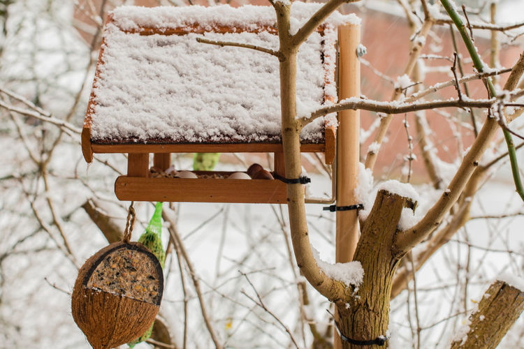 Birdhouse in the winter filled with fodder Autumn Beak Feathers Feeding  Great Tit, Nature Parus Caeruleus Songbird  Winter Animal Bird Bird Seed Birdhouse Birds Birdseed Dumpling  Eat Fat Ball Food Lard Sunflower Seeds Wildlife