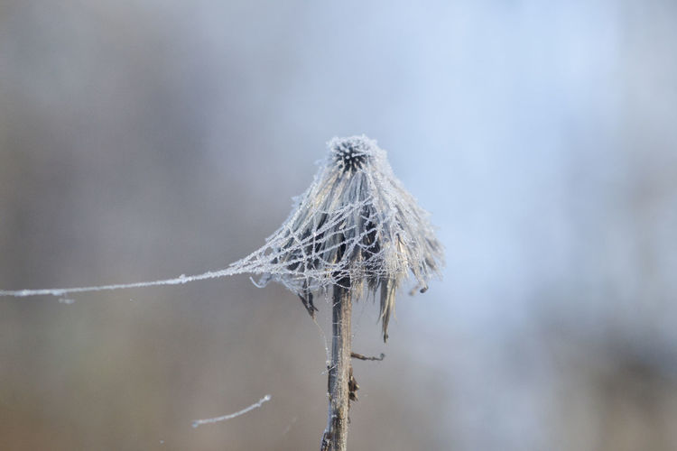 Frozen nature Winter Close-up Cold Temperature Day Dried Plant Focus On Foreground Fragility Frozen Nature Macro Nature No People Outdoors Snow Twig Weather Wild Flowers Winter Winter Wonderland