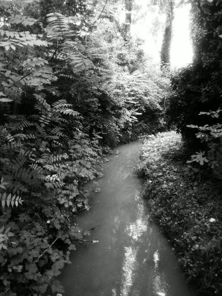 The Secret Spaces Cityjungle Urban River Water Hidden Places Urban Forest