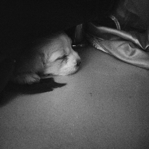 taking nabs :p G.Hakim_photography Puppy❤