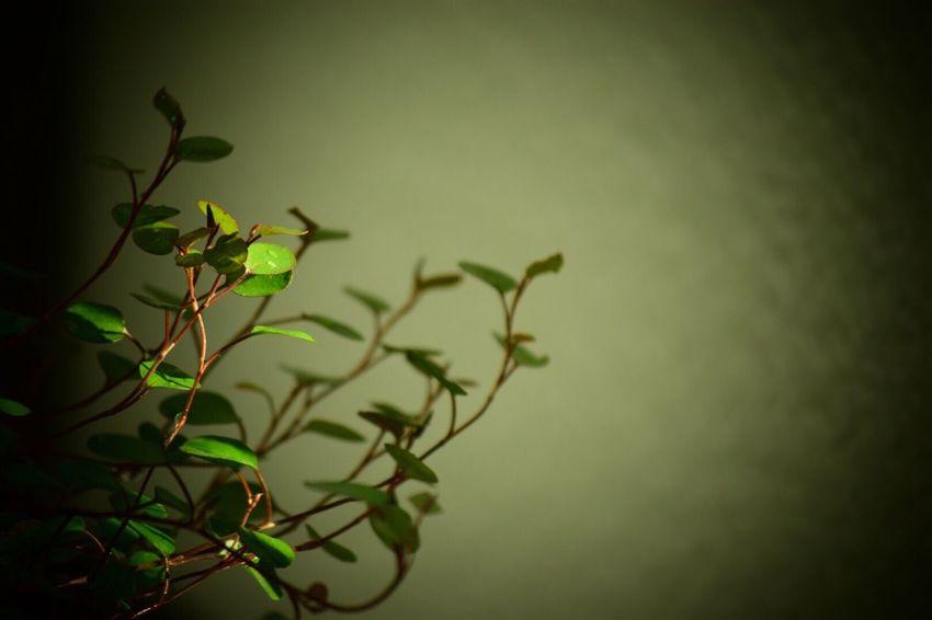 人生には色んな決断 しなきゃならない時があるね Leaf Nature Beauty In Nature Life Force Streetphotography 生きる 日々 Lifeforce