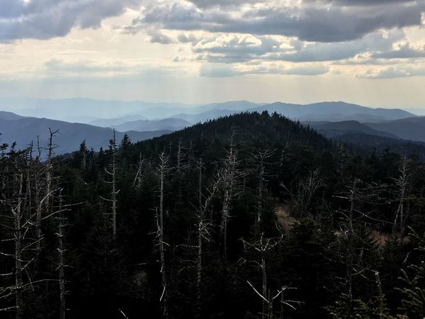 Smoky Mountains Naturephotography Appalachian Trail Appalachian Mountains Clingmans Dome Tennessee North Carolina Hiking Hiking Photography Photography Travel Photography Nature Photography Mountains Nature Trees Landscape Adventure Outdoors Mountain Range Forest Sky Tranquility