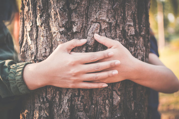 Close-up of hands holding tree trunk in forest