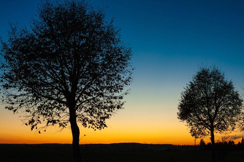 Silhouette tree on field against sky at sunset