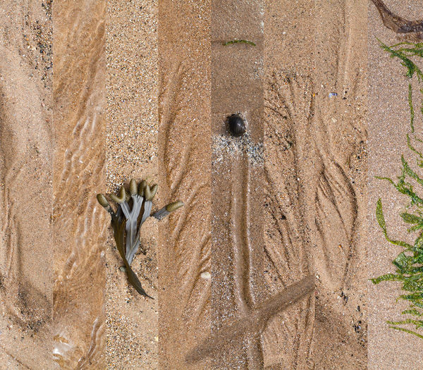 Lines in the sand Beach Cumbria Montana Sand Seaweed Snail Tracks Yellow
