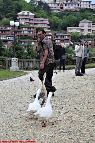 Oche Chicken - Bird Bird Domestic Animals Only Men Nature Animals In The Wild Street Photography