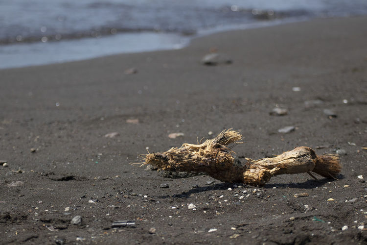 Surface level of driftwood on beach