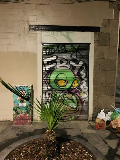 Potted plants on wall of building