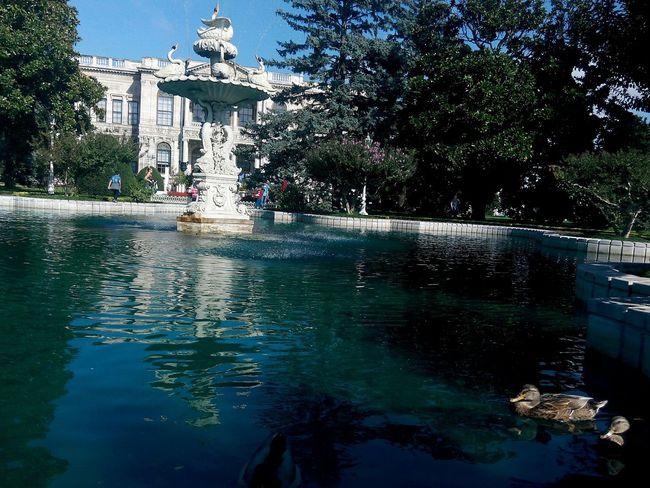 Historical Garden Historic Pool Duck Ordek Havuz Gecmistenguzelbirgun DOLMABAHÇE_PALACE