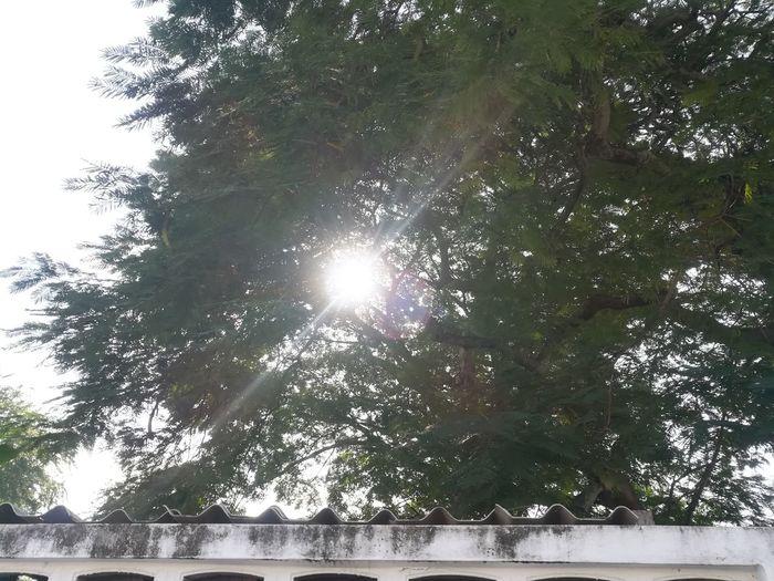 Sun Sun Tree