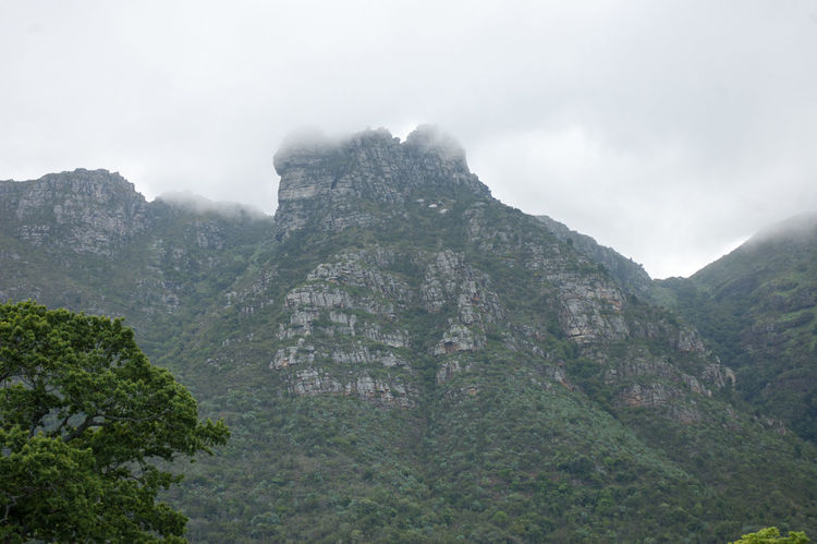 The beautiful mountain surrounding at Kirstenbosch national Botanical Garden, Cape Town, South Africa Beauty In Nature Day Fog Kirstenbosch Kirstenbosch National Botanical Garden Mountain Mountain Range Nature No People Outdoors Scenics Sky Tranquility Tree