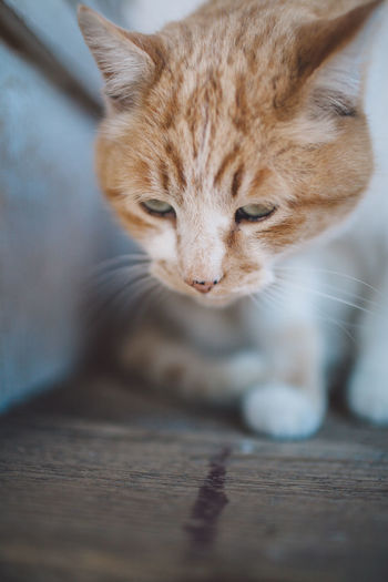Close-Up Of Ginger Cat Sitting On Floor