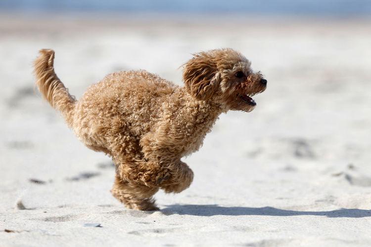 Dog running on beach