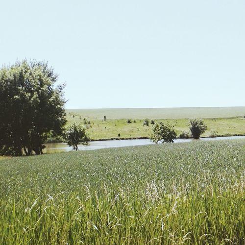Ставок зелень  красота💕🌸🌹 Пейзажи любовьмоя