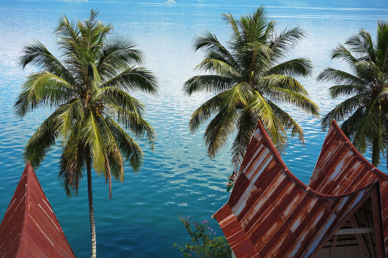 Sumatra  Toba Lake Beauty In Nature Blue Day Growth Nature No People Outdoors Palm Tree Scenics Sea Sky Tranquil Scene Tranquility Tree Water