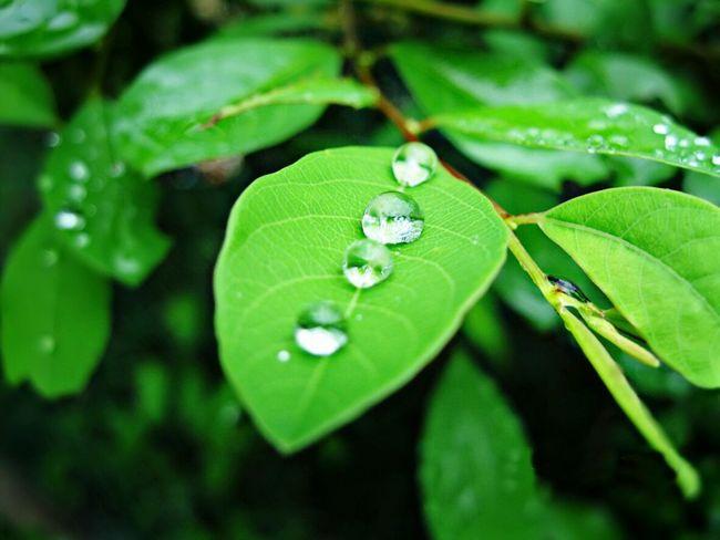 عدستي مناظر عدستي_عيني_الثالثة هدوء لقطه ماليزيا مناظر_طبيعيه لايك_مي EyeEm Best Shots Malaysia قطرات Through My Lens After The Rain ☔