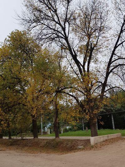 otoño Otoño Paisaje Otoñal Autumn colors Paisaje Colores De La Naturaleza Camino Road Otoño 🍁 Landscape Photography Landscape Paisaje Rural  Tree Sky
