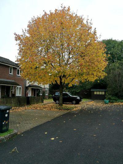 Autumn Tree Outdoors