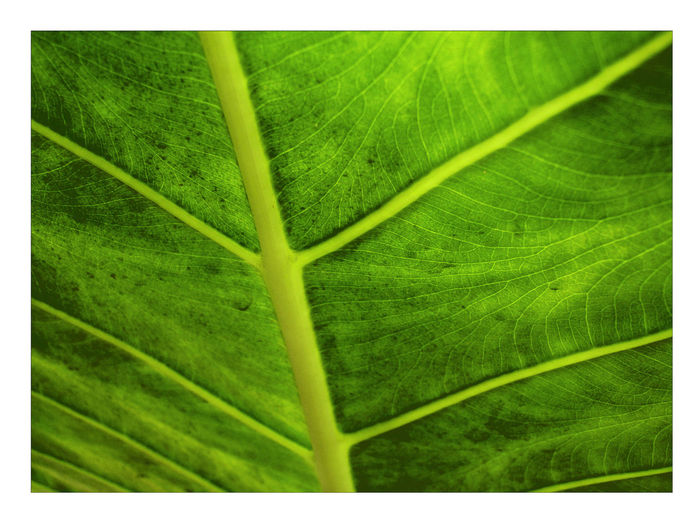 Abstract Photography Growth Leaf Leave Slo Leave Sloseup Te Texture