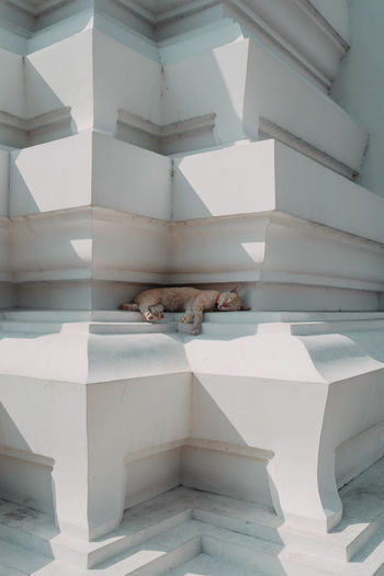 View of cat resting in buddhist temple