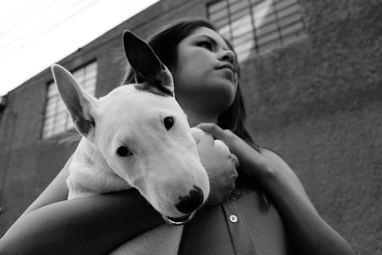 Martha Muza My Dog Bullterrieringles Blackandwhite I Love My Dog Musa Photo Photography Dog