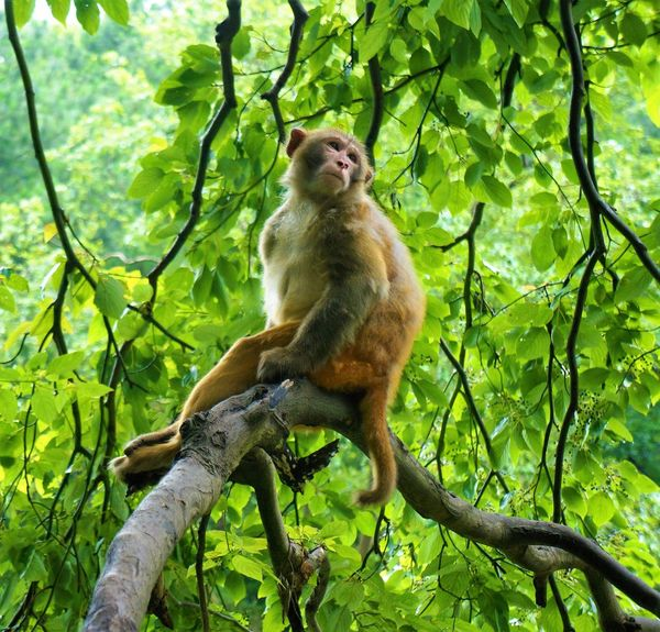 Animal Animal Themes Animals In The Wild Beauty In Nature Branch Day Focus On Foreground Forest Full Length Green Green Color Growth Low Angle View Mammal Monkey Nature One Animal Outdoors Park Pensive Scratching Sitting In A Tree Tree Wildlife Zoology
