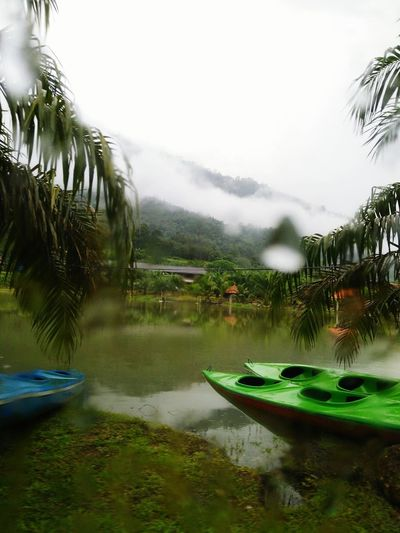 Be. Ready. Water Reflection Tree Lake Torrential Rain Day Nature Beauty In Nature Palm Tree Beautiful View Mountain No People Grass Scenics Tranquility Kayaks Foging Shades Of Winter My Best Travel Photo