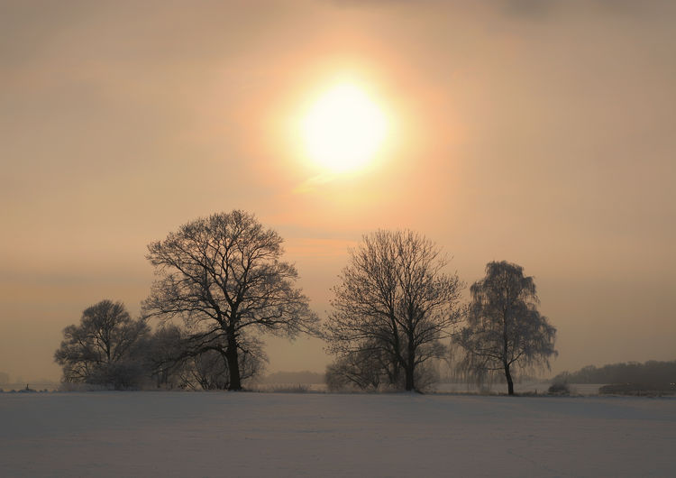 Bare trees on snow field against sky during sunset