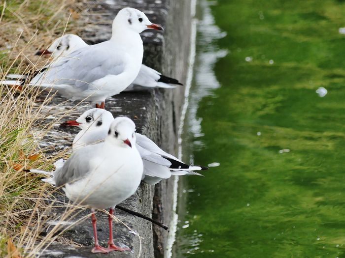 White birds perching on a water