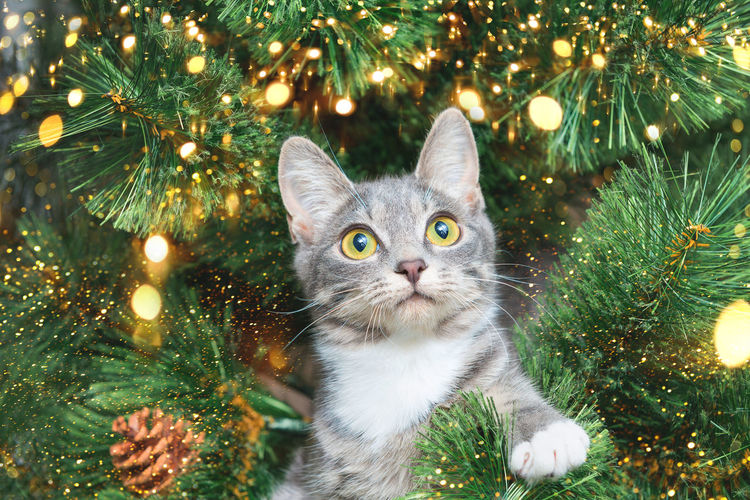 Portrait of cat on christmas tree