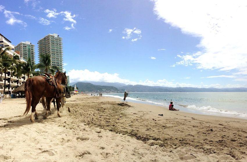 Beachphotography Horses Playa Paradise