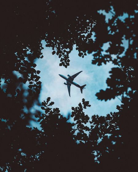Silhouette Water Day Flying No People Low Angle View Animals In The Wild Outdoors Animal Themes Nature Airplane Frame