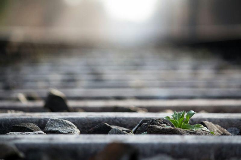 Plant growing between railroad ties