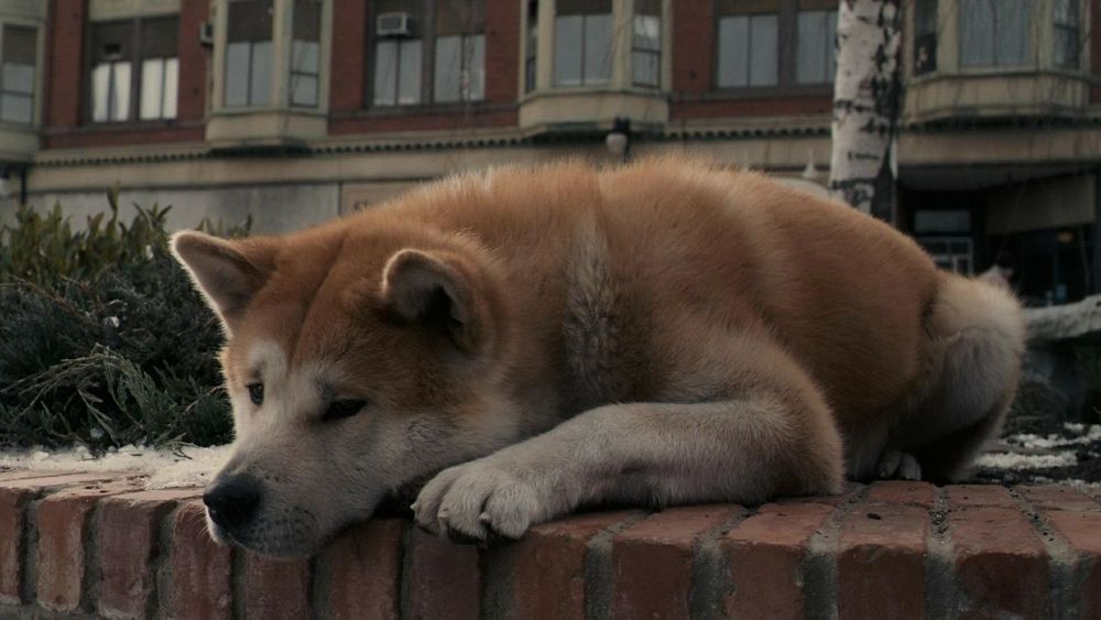 Films Hachiko Hachi Movies My Lovely  Best Film Ever I Love It ❤ ^_^