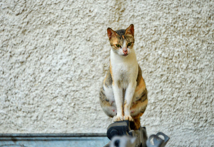A stray car sits perched on a municipal trash container in Muharraq, Bahrain BAhrain, Cat Day Domestic Domestic Animals Domestic Cat Feline Ginger Cat Looking Looking Away Mammal No People One Animal Pets Portrait Sitting Vertebrate Wall Wall - Building Feature Whisker