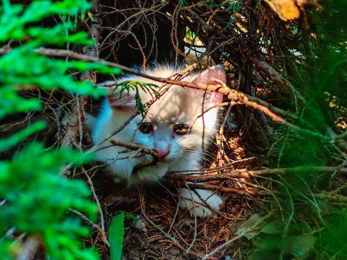Cat Hungary