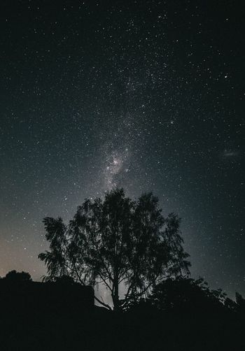 So Milky ✨ EyeEm Nature Lover EyeEm Best Shots EyeEmNewHere Canonphotography Night Tree Silhouette Star - Space Low Angle View Astronomy Beauty In Nature Sky Tranquility Nature Outdoors No People Galaxy Tranquil Scene Milky Way Constellation The Great Outdoors - 2018 EyeEm Awards