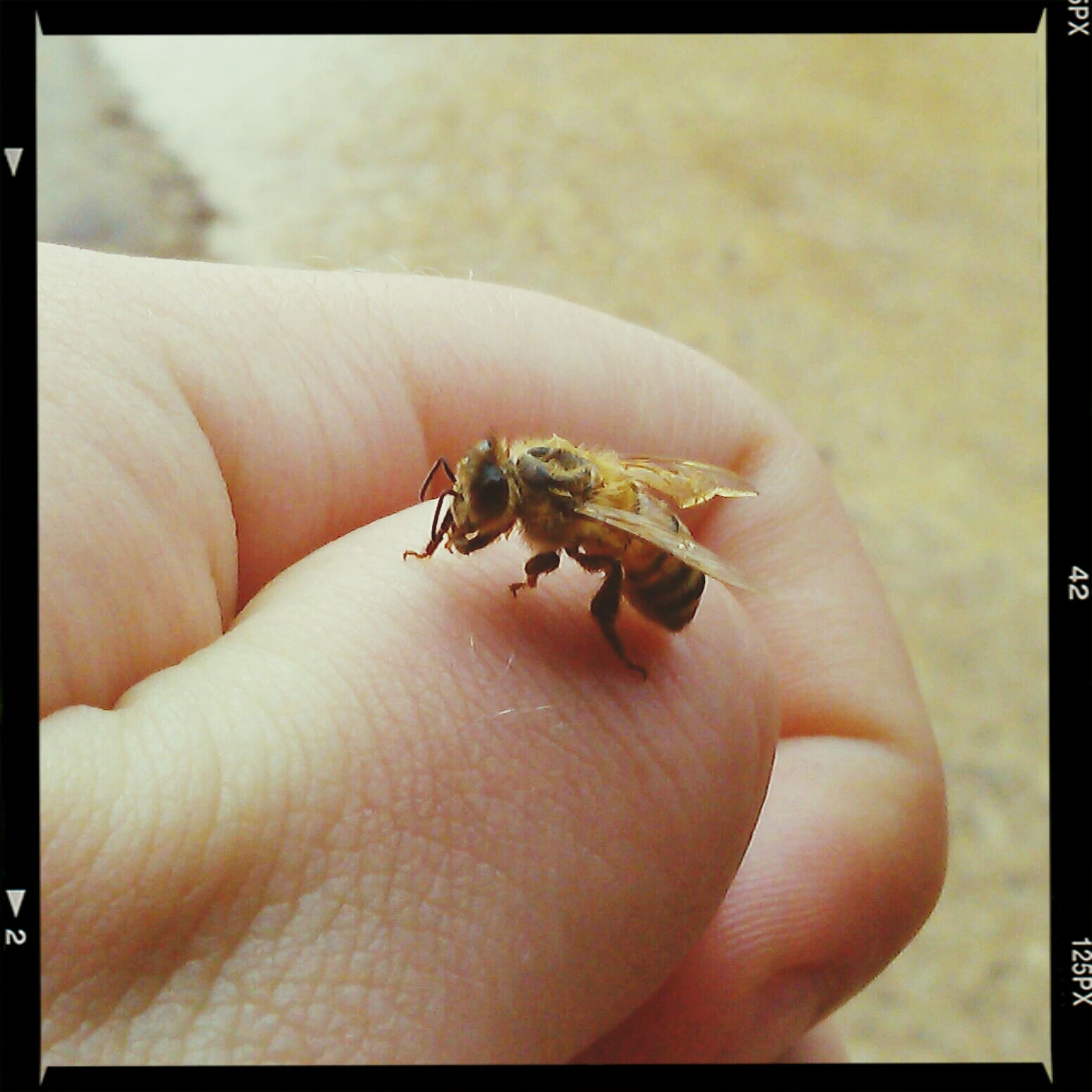 person, animal themes, animals in the wild, wildlife, one animal, human finger, part of, insect, holding, close-up, unrecognizable person, cropped, personal perspective, focus on foreground, zoology, palm, reptile