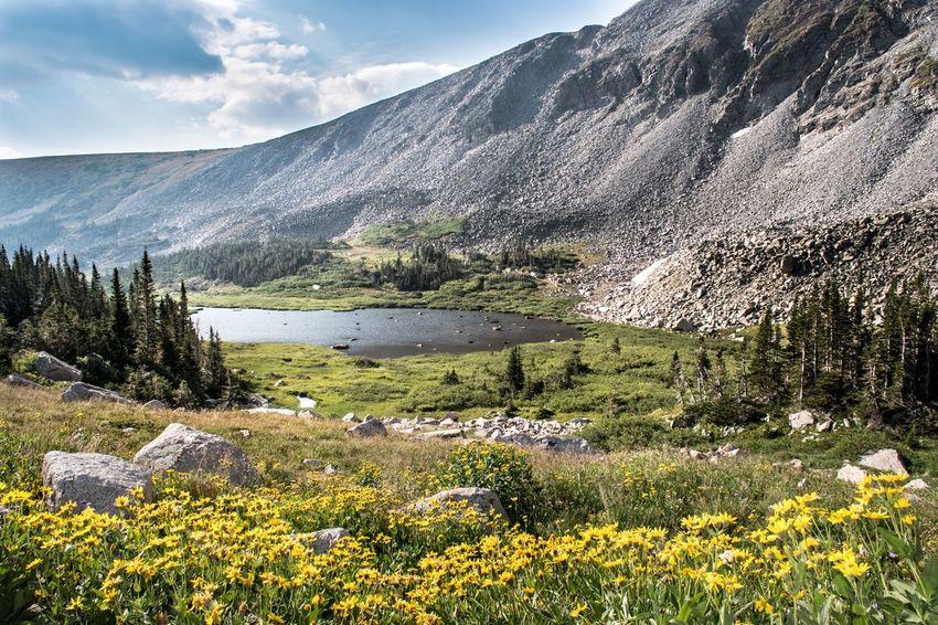 Indian Peaks Wildflowers Colorado