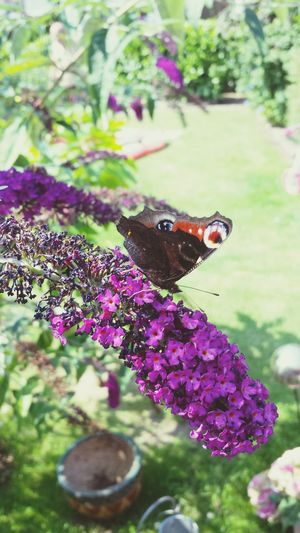 butterflyyyy Outside Nice Sommer2014